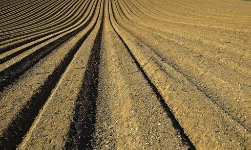 Kwasy humusowe w kredzie nawozowej – działanie i występowanie